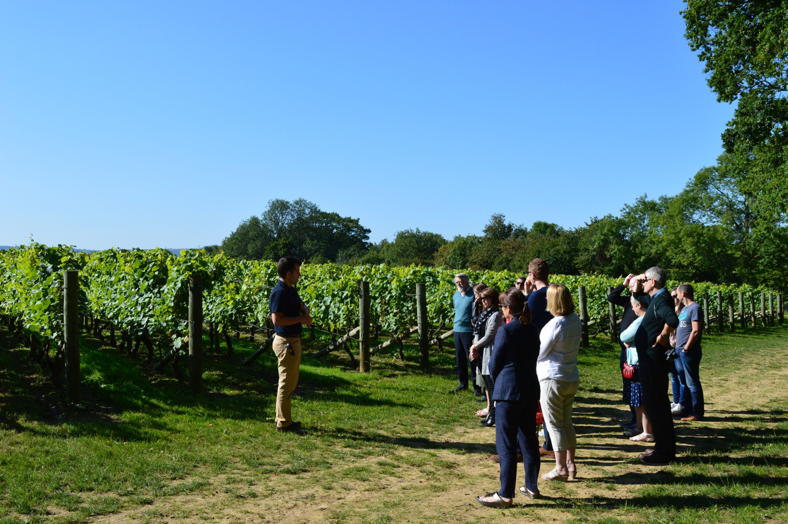 a small group of people listening to a talk in front of the vineyard fields