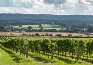view of vineyard and surrounding fields